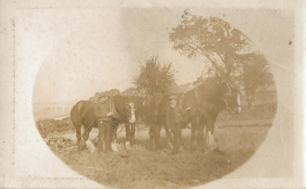 Working the land at Library Farm, James Green's farm at Kingston (later called Moat Farm) © D Green